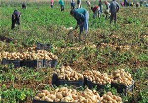 2 مليون دولار إجمالي صادرات الإسماعيلية من الحاصلات الزراعية في 10 أشهر