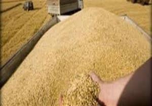 التموين: ملتزمون بقرار الزراعة بشأن نسبة الإرجوت في مناقصة القمح اليوم