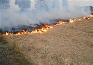 البيئة: استخدام 3 أقمار صناعية لتتبع نقاط حرق قش الأرز