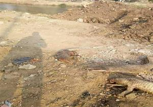 """بعد العثور على تماسيح... رئيس مدينة شبرا الخيمة: """"هنطهر ترعة الإسماعيلية"""""""