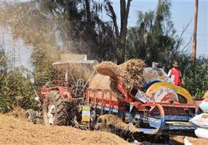 """""""الزراعة"""": حصد 90% من محصول الأرز.. وتجميع ربع مليون طن قش"""