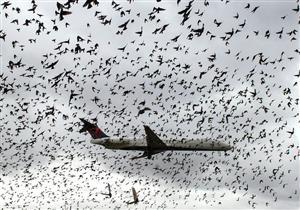 بالصور- ماذا يحدث عندما تهاجم الطيور طائرة في الجو؟