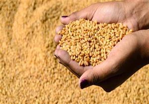 """الزراعة: حكم """"حظر الإرجوت"""" لم يصلنا.. واستيراد القمح يسير كالمعتاد"""