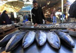بعد افتتاح مزرعة غليون.. تجار: أسعار السمك ستنخفض 20% ولكن بعد 6 أشهر
