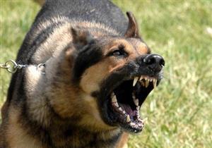 إصابة 3 أطفال عقرهم كلب ضال في الدقهلية