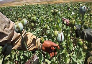 الأمم المتحدة: تراجع إنتاج الأفيون في ميانمار خلال 2017