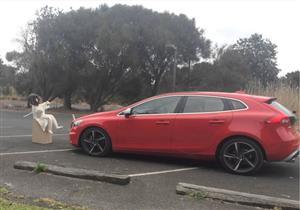 """فيديو يكشف خطورة الاعتماد على نظام """"التوقف الذاتي"""" بالسيارات الحديثة"""