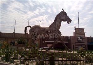 بالفيديو-من الخُردة.. حكاية الحصان الأشهر في الشرقية