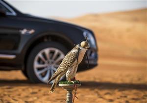 """بالصور.. بنتلي تقدم سيارة خاصة لمحبي الصيد بـ""""الصقور"""""""