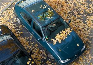 """للحفاظ على طلاء السيارة.. يجب إزالة """"المن"""" عنها في نفس اليوم"""