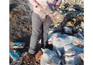 إعدام 450 كيلو أسماك ودواجن فاسدة في سوهاج