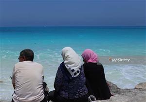 من الساحل الشمالي.. أهالي يروون لمصراوي كيف أفسد قنديل البحر مصيفهم؟