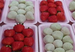 فراولة بيضاء يبلغ سعر الواحدة منها 10 دولار