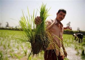 أسعار توريد المحاصيل الزراعية.. أزمة مستمرة بين الحكومة والفلاحين