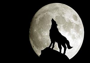 من هو الصحابي الذي كلمه الذئب وأخبره بنبوة النبي؟!