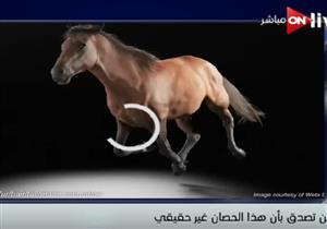 فيديو لكيفية بناء جسم حصان ليظهر في السينما والألعاب وكأنه حقيقي