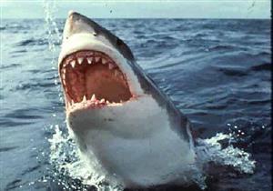 خدعوك فقالوا ...أسماك القرش تأكل لحوم البشر