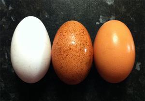 تعرف على الفرق بين البيض البلدي والأحمر والأبيض