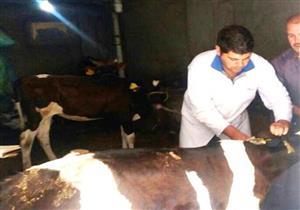 """انطلاق الحملة القومية لتحصين الماشية ضد """"الحمى القلاعية"""""""