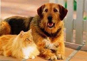 باحث: الكلاب والقطط تتسبب في زيادة انبعاثات ثاني أكسيد الكربون