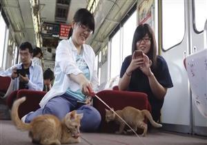 اليابان تطلق أول قطار للقطط في العالم -فيديو
