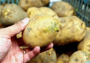 على ماذا تدل العلامات الخضراء في البطاطس؟
