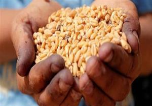 هيئة السلع التموينية تشتري 175 ألف طن من القمح الروسي