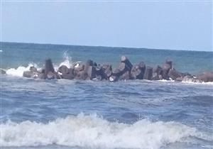 """صديق ضحية """"شاطئ الموت"""" بالإسكندرية يروي تفاصيل 3 أيام مأساوية لانتشال الجثمان - صور"""