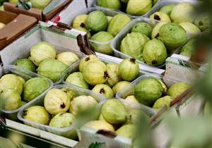 أول تعليق من الزراعة على حظر السعودية لمحصول الجوافة المصري