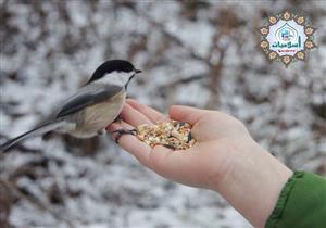 أمين الفتوى يوضح: هل إطعام الطير من الزكاة؟