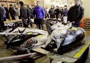 بيع سمكة تونة ضخمة في اليابان مقابل أكثر من 36 مليون ين