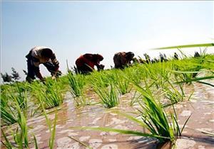 حكم الأرض الزراعية المؤجرة ضمن تركة المزارع المتوفى.. الإفتاء توضح