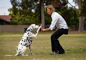 كيف تعلم كلبك الطاعة وتهذِّب سلوكه؟ - فيديو