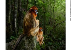 قردان السبب في فوز مصور بجائزة الحياة البرية 2018