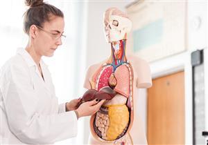 إجراءات بسيطة لتجنب ارتفاع إنزيمات الكبد