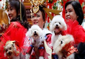 مواعيد غرامية مع كلاب بمناسبة عيد الحب في الفلبين