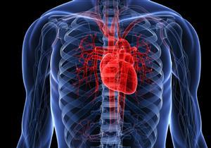 حقائق مثيرة عن أهم عضلة في جسم الإنسان