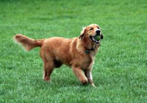 بالصور: أغلى جاكيت في العالم يرتديها كلب
