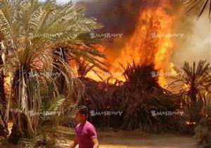بعد تفحّم 90 نخلة.. السيطرة على حريق هائل بمزرعة في الوادي الجديد