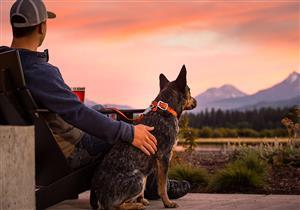 4 فوائد نفسية وصحية عند تربية الكلاب