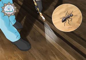 الحالة التى يسمح فيها بقتل النمل توضحها الإفتاء