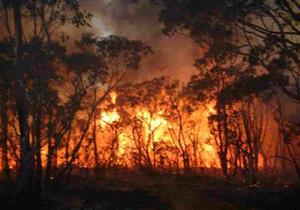 حرائق بالغابات في استراليا