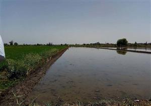 بالصور- حملة لإزالة زراعات الأرز المخالفة في الدقهلية