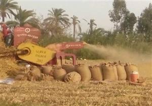 بالصور- حصاد 8 آلاف فدان قمح في دمياط
