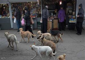زيادة عمليات تبني الكلاب الضالة في كوريا الجنوبية بالخارج