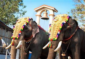 ما لا تعرفه عن مهرجانات الفيلة في الهند.. تعذيب وتقييد بسلاسل ومسامير