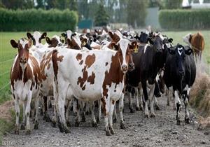 محافظ الجيزة: 177 مواطنا تقدموا لمشروع الثروة الحيوانية