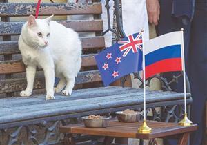 بالصور- 7 حيوانات توقعت بنتائج مباريات كؤوس العالم