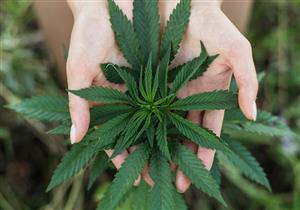 FDA توافق على دواء من الماريجوانا لعلاج الصرع