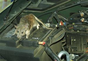 """""""ديكرا"""": القوارض قد تتسبب في احتراق سيارتك بالكامل"""